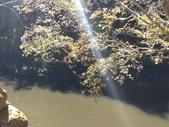 杉林溪 遊踪:IMG_20201117_110425_1.jpg