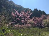 杉林溪的櫻花林:IMG_20210316_110547.jpg