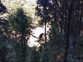 杉林溪 遊踪:IMG_20201117_103314_1.jpg