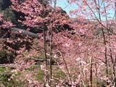 杉林溪的櫻花林:IMG_20210316_111906_1.jpg