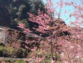 杉林溪的櫻花林:IMG_20210316_111953.jpg