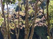 杉林溪 遊踪:IMG_20201117_110301_1.jpg
