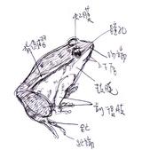 手繪創作:蛙部位.jpg