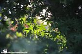 2014/10/28~11/04東京富士八日遊:1031029-1102_富士五湖 (11).jpg