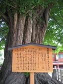 960601-6飛驒高山金澤:高山國分寺千年銀杏樹解說牌