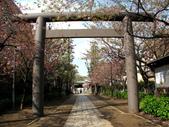 970411-12龜戶天神社.北之丸.野川公園:970411-43