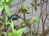 南港公園的生態:980114南港公園翠鳥-4
