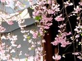970411-12龜戶天神社.北之丸.野川公園:970411-48