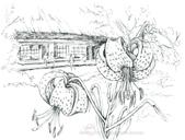 手繪創作:20050803-合掌村-針筆18x24-s.jpg