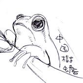 手繪創作:中國樹蟾