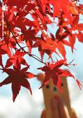2014/10/28~11/04東京富士八日遊:1031029-1102_富士五湖 (17).jpg
