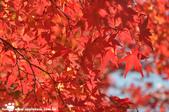 2014/10/28~11/04東京富士八日遊:1031029-1102_富士五湖 (16).jpg