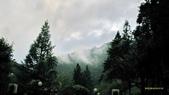 明池國家森林遊樂區 Mingchi Nat'l Park:B Mingchi 090212 wood (22).JPG