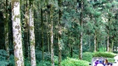 明池國家森林遊樂區 Mingchi Nat'l Park:B Mingchi 090212 wood (28).JPG
