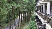 明池國家森林遊樂區 Mingchi Nat'l Park:B Mingchi 090212 wood (3).JPG