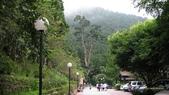 明池國家森林遊樂區 Mingchi Nat'l Park:B Mingchi 090212 wood (7).JPG