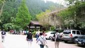 明池國家森林遊樂區 Mingchi Nat'l Park:B Mingchi 090212 wood (8).JPG