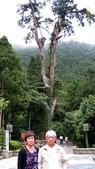 明池國家森林遊樂區 Mingchi Nat'l Park:B Mingchi 090212 wood (11).JPG