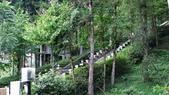明池國家森林遊樂區 Mingchi Nat'l Park:B Mingchi 090212 wood (13).JPG
