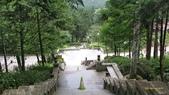 明池國家森林遊樂區 Mingchi Nat'l Park:B Mingchi 090212 wood (17).JPG