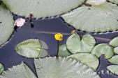 【南投埔里】紙教堂Paper Dome~來自日本的桃米生態村精神堡壘:IMG_0894.jpg
