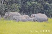 考艾國家公園/大山國家公園(Khao Yai National Park)~徜徉世界自然遺產,飽覽瀑:DSC06022.jpg