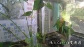 【台北士林】芝山文化生態綠園~在都會綠世界探索昆蟲大奧秘‧蝴蝶標本製作:P1610877.jpg