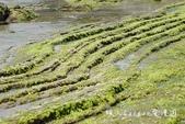 【基隆八斗子旅遊】潮境公園潮間帶+長潭漁村+八斗邀在地風味餐~傳統草鞋海洋風親子小旅行‧海科館附近美: