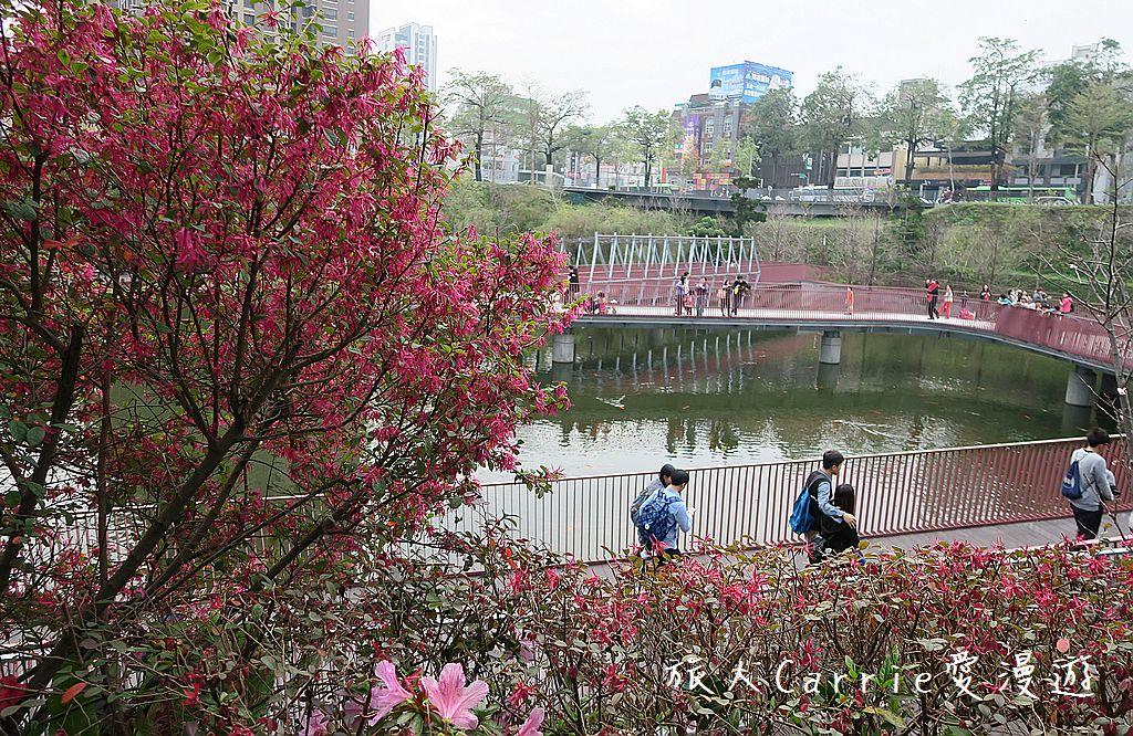 【台中旅遊】秋紅谷公園‧秋紅谷@幸福小水舞.com‧秋紅谷3A House ~大都會中的生態景觀公園: