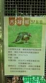 【台北士林】芝山文化生態綠園~在都會綠世界探索昆蟲大奧秘‧蝴蝶標本製作:P1610913.jpg