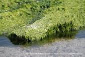 【新北市石門區】老梅綠石槽~季節限定的海濱美景:IMG_0692.jpg
