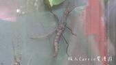 【台北士林】芝山文化生態綠園~在都會綠世界探索昆蟲大奧秘‧蝴蝶標本製作:P1610879.jpg