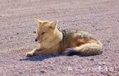 【玻利維亞旅遊】烏尤尼Uyuni天空之鏡三日團 Day2‧Salty Desert Aventour:38DSC00922.jpg