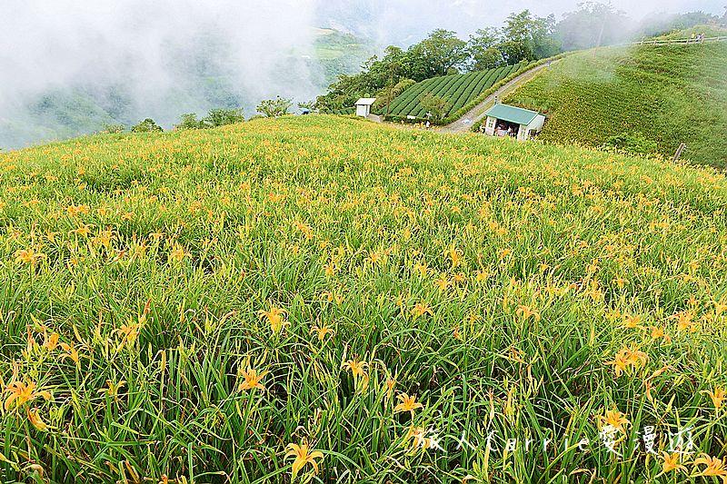 【台東旅遊】太麻里金針山~忘憂谷-雙乳峰,漫山遍野花現金針山 戀上太麻里!: