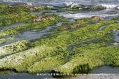 【新北市石門區】老梅綠石槽~季節限定的海濱美景:IMG_0693.jpg