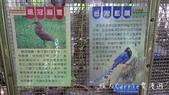 【台北士林】芝山文化生態綠園~在都會綠世界探索昆蟲大奧秘‧蝴蝶標本製作:P1610919.jpg