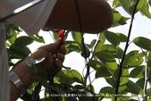 新竹縣新埔鎮】新埔梨村~超甜多汁的南平寄接梨‧梨冰DIY‧窯烤比薩DIY‧尋訪農產新亮點-筍香梨甜尋:IMG_4501.jpg