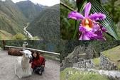印加古道2天1夜‧Llama Path馬丘比丘私人嚮導團~挑戰連續8小時Inca Trail高強度健:00.jpg
