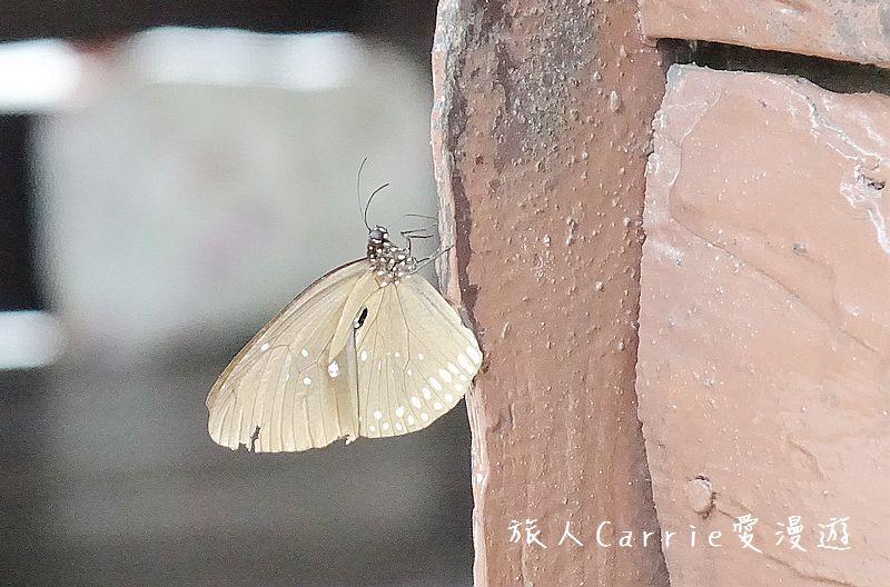 考艾國家公園/大山國家公園(Khao Yai National Park)~徜徉世界自然遺產,飽覽瀑:DSC06128.jpg