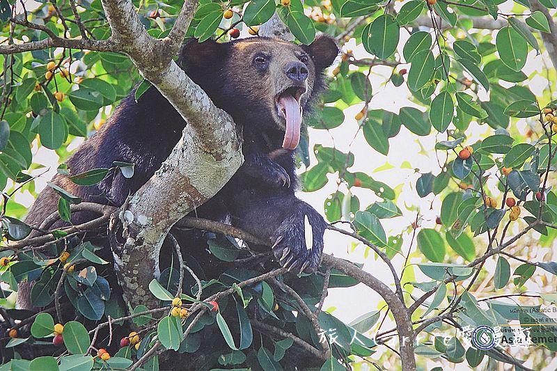 考艾國家公園/大山國家公園(Khao Yai National Park)~徜徉世界自然遺產,飽覽瀑:DSC06023.jpg