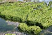 【新北市石門區】老梅綠石槽~季節限定的海濱美景:IMG_0708.jpg