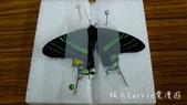 【台北士林】芝山文化生態綠園~在都會綠世界探索昆蟲大奧秘‧蝴蝶標本製作:P1610979.jpg