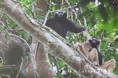 考艾國家公園/大山國家公園(Khao Yai National Park)~徜徉世界自然遺產,飽覽瀑:DSC06026.jpg