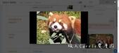 【2019學習推薦】 Engoo真人線上英文家教〜1對1 私人家教24小時均可上課‧老師多元,教材免:09Red Panda.jpg