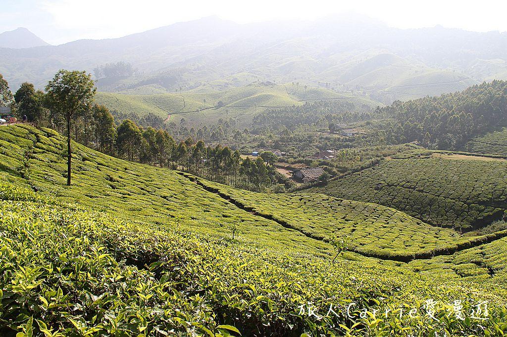 【南印喀拉拉】穆納(Munnar)~李安少年Pi場景‧偶遇茶園採茶女的感動:01IMG_5504.jpg