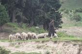 【喀什米爾Kashmir】貢馬Gulmarg‧喜馬拉雅Himalaya~世界第一的高山纜車:16IMG_7276.jpg