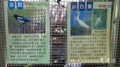 【台北士林】芝山文化生態綠園~在都會綠世界探索昆蟲大奧秘‧蝴蝶標本製作:P1610916.jpg