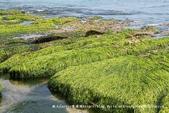 【新北市石門區】老梅綠石槽~季節限定的海濱美景:IMG_0710.jpg