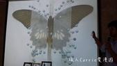 【台北士林】芝山文化生態綠園~在都會綠世界探索昆蟲大奧秘‧蝴蝶標本製作:P1610951.jpg