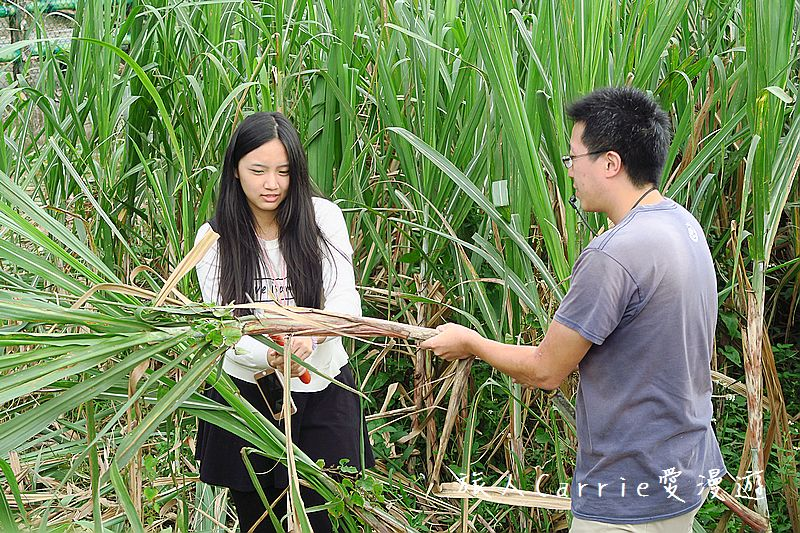 新竹南埔社區 新城社區【新竹旅遊】~環境教育 農村再生 製糖體驗 黑糖手工饅頭DIY 親子生態之旅 :